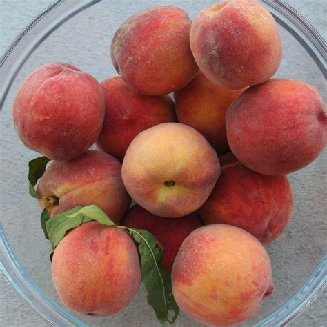 Stone Fruit Growing Problems Preventing And Treating