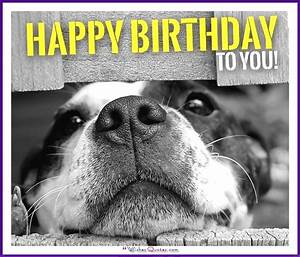 Happy Birthday Memes with Funny Cats, Dogs and Cute ...