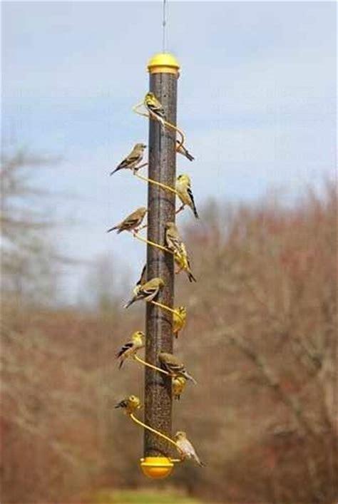 yellow spiral finch feeder    birdhouse chick