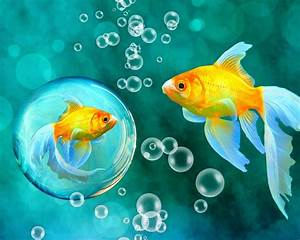 Gold Fish Bubbles Wallpaper 44202