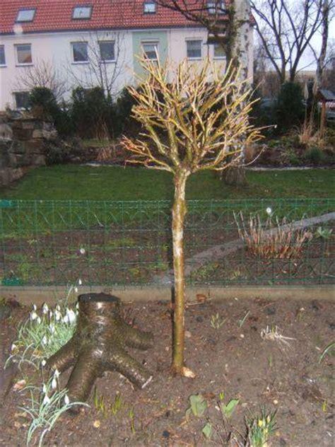 Garten Zu Kaufen Gesucht by Info Zu Harlekinweide Gesucht Mein Sch 246 Ner Garten Forum