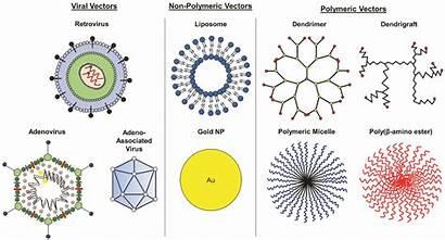 Gene Viral Therapy Vectors Non Delivery Nanomaterials