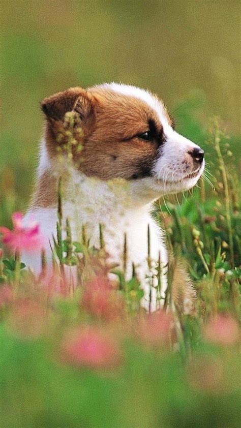 See more ideas about dog phone dog wallpaper dog lovers. Cute Puppies Phone Wallpapers - Wallpaper Cave