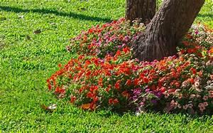 Gartengestaltung Unter Bäumen : bepflanzung unter b umen diese pflanzen kommen infrage ~ Yasmunasinghe.com Haus und Dekorationen