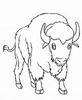 Coloring Bison Pages Printable Toddler Colouring Buffalo Animal Bestcoloringpagesforkids Books Sheets Sheet Coloringbay Adult American Cartoon Antelope Kitten Hellboyfull sketch template