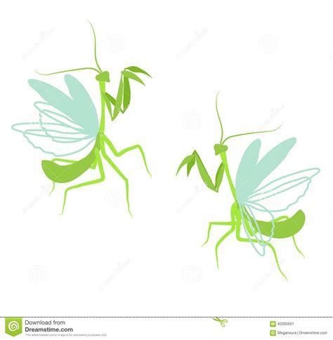 Praying Mantis ,on White Background. Stock Image ...