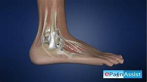 Ankle Tendon Diagram