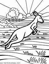 Australian Australia Coloring Animals Outback Kangaroo Animal Wallpaperartdesignhd Aboriginal Sheets Adult sketch template
