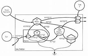 Ecosystem Simulations
