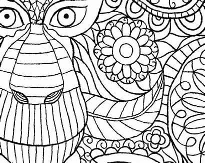 Jungle Colouring Monkey Macmillan Pattern Whsmith