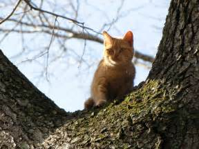 cat in a tree cat rescue rural ramblings
