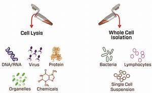 Biospensa Resources