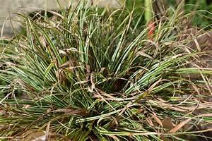 Gräser Zurückschneiden Frühjahr : ziergr ser zur ckschneiden pflanzenkotten heimann in ~ Lizthompson.info Haus und Dekorationen