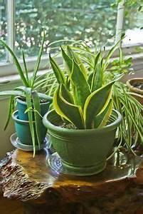 Welche Pflanzen Fürs Schlafzimmer : pflanzen die f rs bad geeignet sind bad inspiration pflanzen pflanzen f rs bad und ~ Frokenaadalensverden.com Haus und Dekorationen