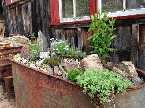 growing with plants how to make a real alpine trough garden