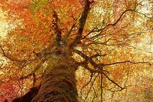 Vintage picture of autumn tree | Stock Photo | Colourbox