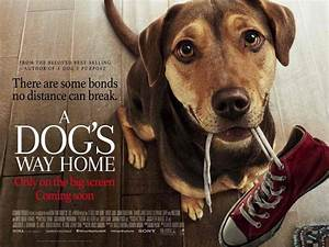A Dogs Way Home New Trailer Further Reveals