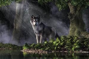 Wolf In The Forest Digital Art by Daniel Eskridge