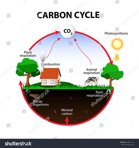 Carbon Cycle Carbon Path Atmosphere Into Stock