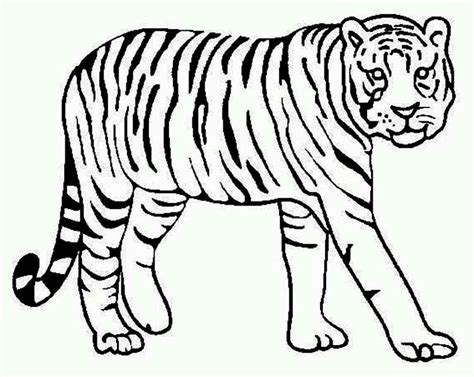 tiger coloring pages    clipartmag