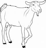 Goat Coloring Pages Printable Walking Chin Template Ages Templates sketch template