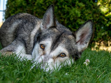 Shedding In Fall by Pet Health Corner Fall Shedding How To Cope Ontario