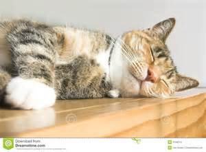 cat stock cat stock images image 2193214