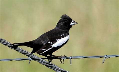 list of the most famous state birds of united states us