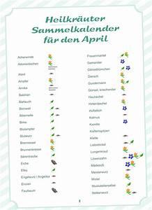 Welche Pflanzen Kann Man Im Herbst Pflanzen : welche kr uter kann man im april sammeln im kr uter ~ Articles-book.com Haus und Dekorationen