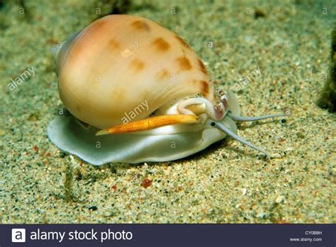types  animals   water quora