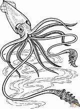 Squid Giant Coloring Printable Deep Ocean Colossal Sea Drawing Supercoloring Colouring Animals 5e Creatures Animal кальмар Dot Kraken Firefly Adult sketch template