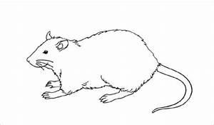 Rat Template