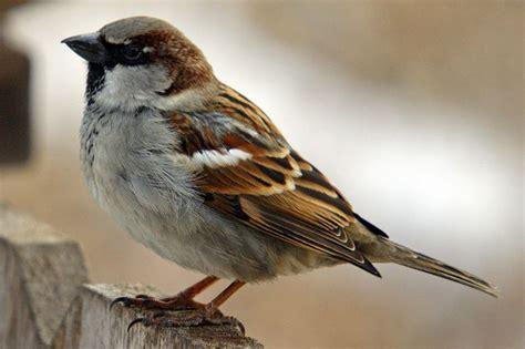 Bird Prevention Specialists