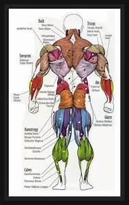 Diagram Of A Human Female Skeleton Back  Description From