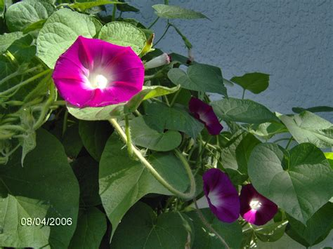 Climbing Plants Ourrosserave