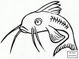 Catfish Coloring Fish Drawing Printable Clipart Template Colouring Redtail Bullhead Channel Sketch Getdrawings Coloringpages101 Library sketch template