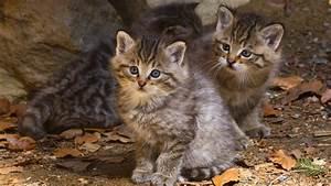 Experten warnen: Fassen Sie diese Katzen nicht an