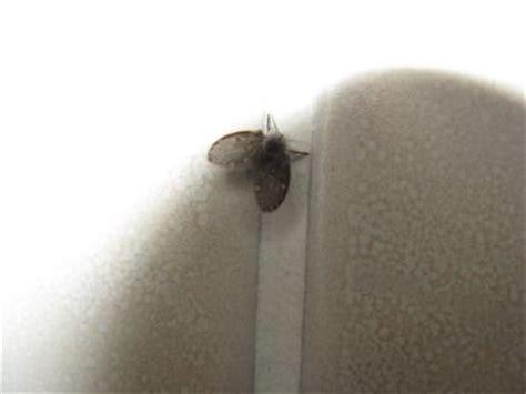 kleine zwarte beestjes in badkamer kleine zwarte vliegjes help