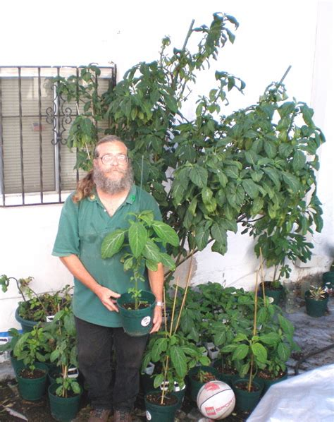 how large can potted salvia plants grow salvia