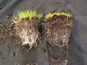 Mycorrhizae; Arbuscular Mycorrhizae; Ectomycorrhizae ...