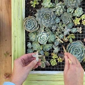 mur vegetal exterieur a faire soi meme en 13 idees a essayer With deco autour d une piscine 13 creer un mur vegetal en interieur