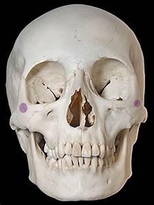 Zygomaticofacial foramen