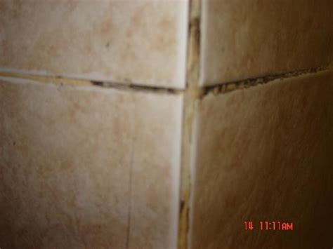 black mold that was all through wall tile grout picture