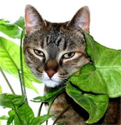 garden plants safe for cats pdf