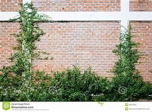 Plantes Grimpantes Mur : la centrale verte de plante grimpante sur un mur de ~ Melissatoandfro.com Idées de Décoration