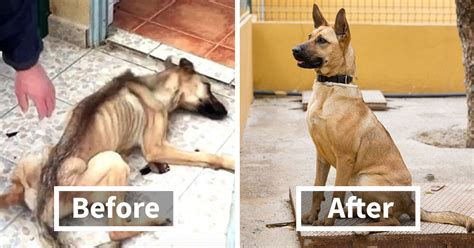 incredible   rescue dog transformations