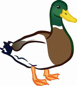 Free Clipart Of A Duck, Mallard Drake
