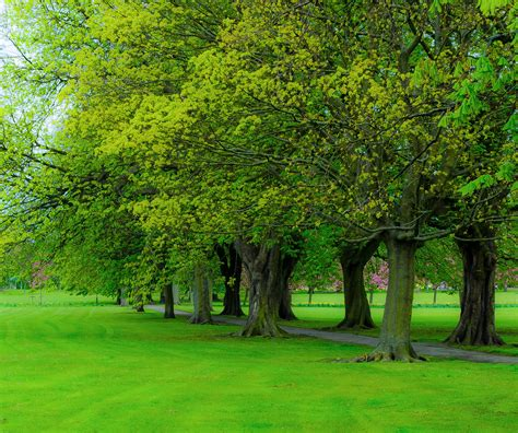 Tree Backgrounds Tree Background Images 183