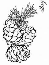 Pine Coloring Cone Printable sketch template