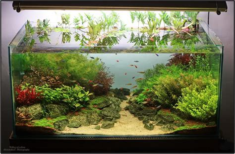 Aquascape Design Software by Valley Of Colors Page 2 Aquascaping World Forum
